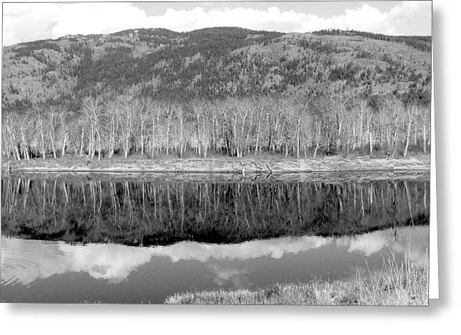 Reflections In River Greeting Cards - Reflections In Black And White Greeting Card by Will Borden