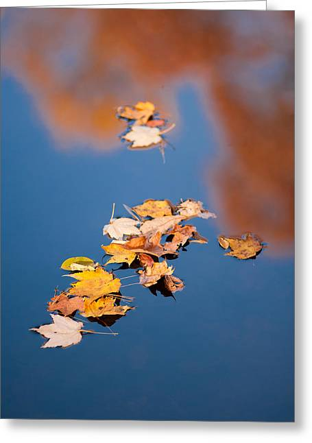 Fall Trees With Stream. Greeting Cards - Reflections in Blue Greeting Card by Joye Ardyn Durham
