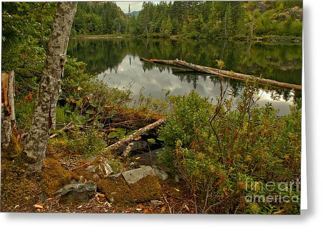 Canadian Wilderness Greeting Cards - Reflections In Starvation Lake Greeting Card by Adam Jewell