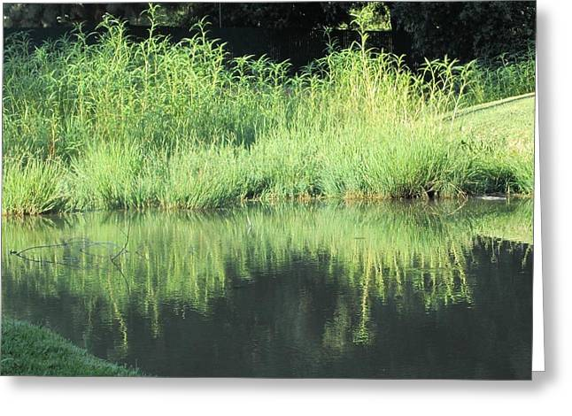 Pond In Park Greeting Cards - Reflections in the Back Pond Greeting Card by Chris Gudger