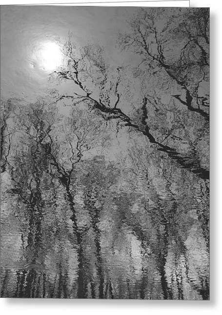 Reflections In Water Greeting Card by Kathleen Scanlan