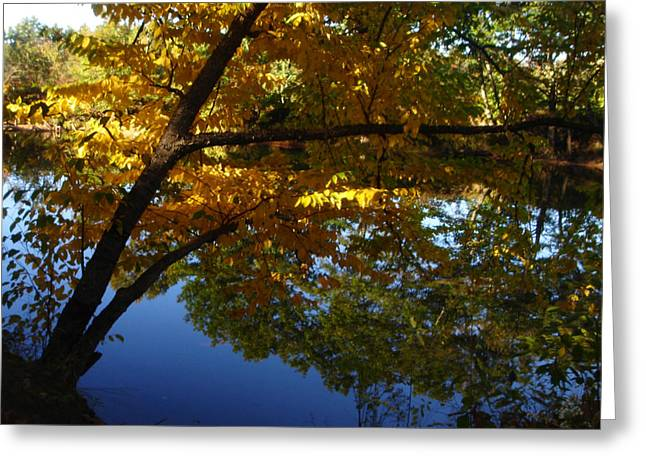 New Greeting Cards - Reflections Greeting Card by Jacqueline Sablan