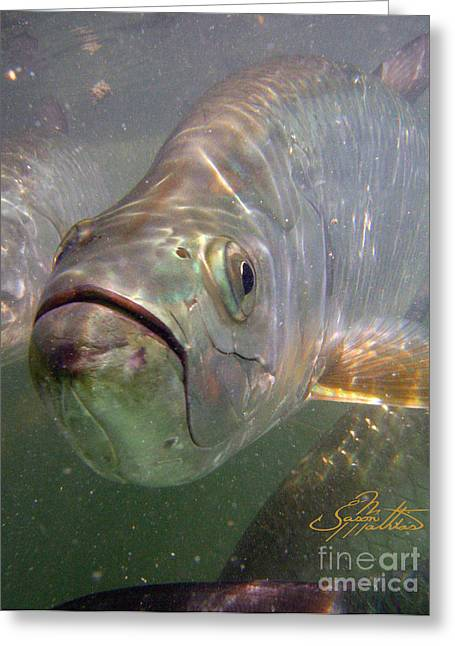 Sportfish Boat Greeting Cards - Reflections Greeting Card by Jason Mathias