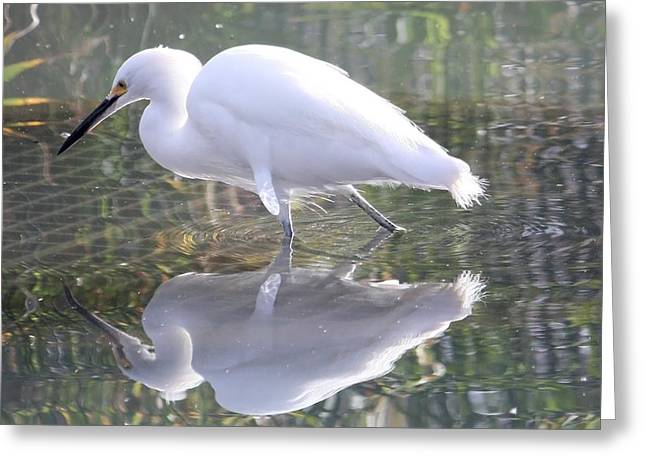 Sea Animals Greeting Cards - Reflections Greeting Card by Jeff Tuten