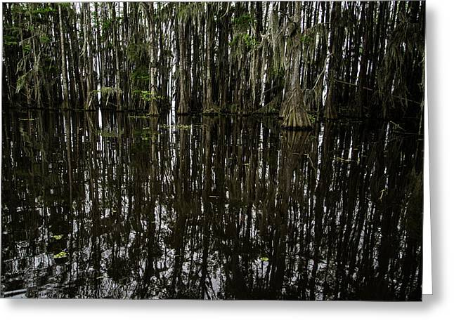 Caddo Lake Greeting Cards - Reflections Greeting Card by John Hesley