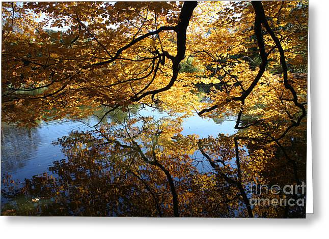 Trees Reflecting In Water Greeting Cards - Reflections Greeting Card by John Telfer