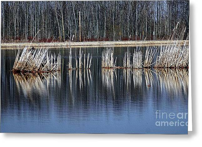 Morass Greeting Cards - Reflections Greeting Card by Kathleen Struckle
