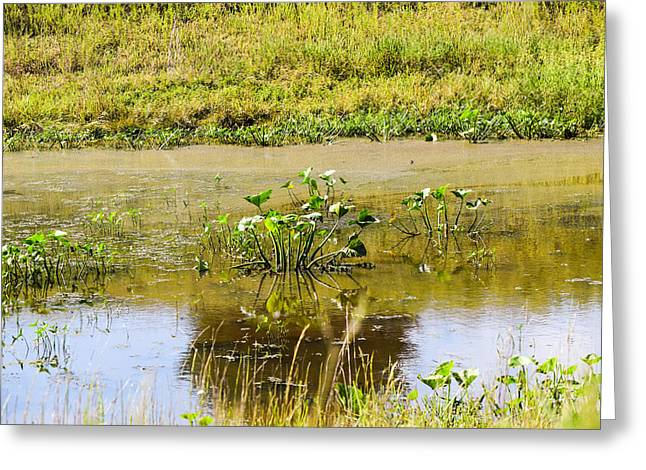 Water Lilly Greeting Cards - Reflections Greeting Card by Lawrence Hess