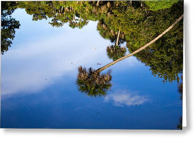 Reflections Greeting Card by Lee Stewart