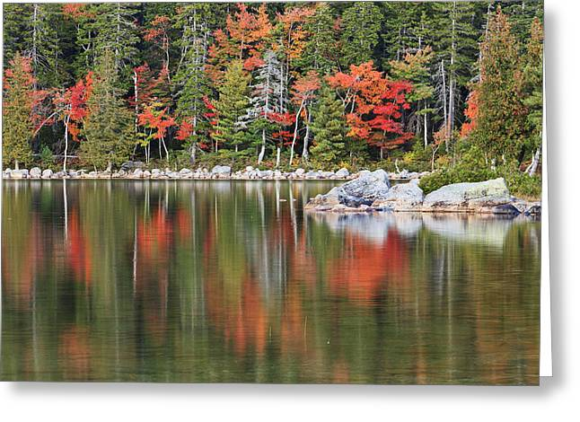 Duck Pond Greeting Cards - Reflections Greeting Card by Mike Lang