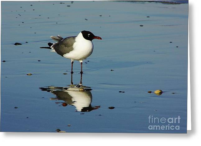 Best Ocean Photography Greeting Cards - Reflection - Sea - Gull Greeting Card by D Hackett