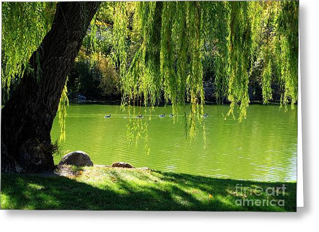 Willow Lake Digital Art Greeting Cards - Reflections of Green  Greeting Card by Kristi Johnson