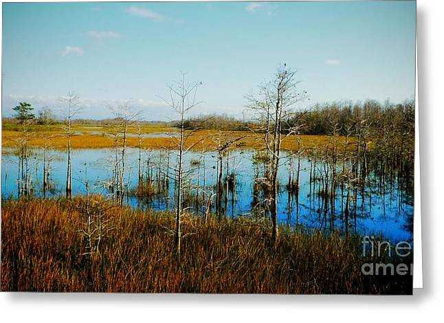 Aquatic Greeting Cards - Reflections of loneliness Greeting Card by Nina Prommer