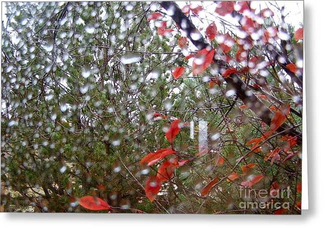 Greeting Cards - Reflections of Rain Greeting Card by LeLa Becker