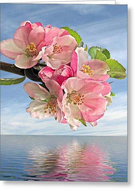Garden Petal Image Greeting Cards - Reflections Of Spring at Apple Blossom Time - Square Greeting Card by Gill Billington