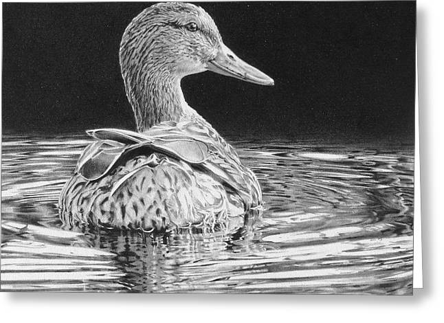 Mallard Drawings Greeting Cards - Reflections on a Pond Greeting Card by Kathryn Hansen
