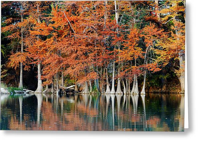 Bald Cypress Greeting Cards - Reflections on The Frio River - Garner State Park - Texas Hill Country Greeting Card by Silvio Ligutti
