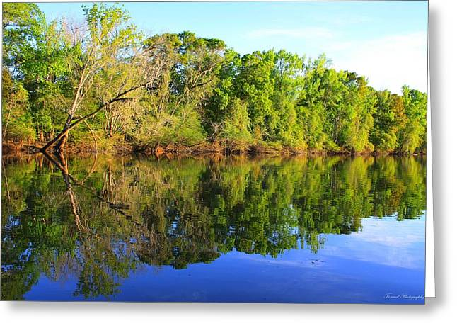 Reflections Of Trees In River Greeting Cards - Reflections on The River Greeting Card by Debra Forand