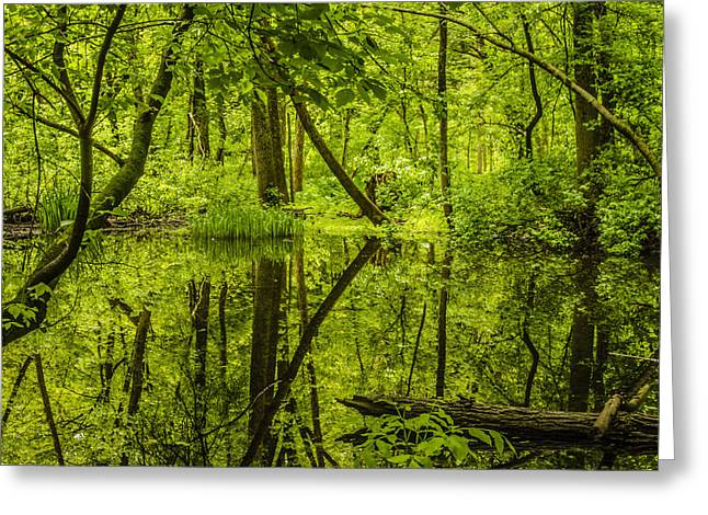 Petrifying Springs Greeting Cards - Reflections Greeting Card by Thomas Visintainer