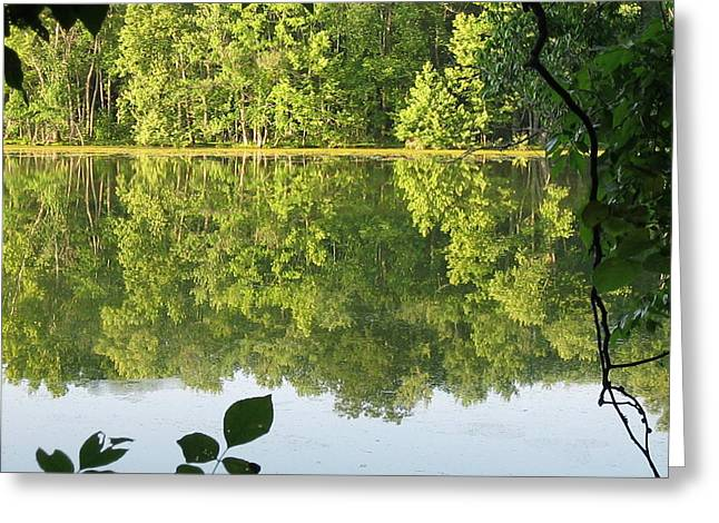 Pond In Park Greeting Cards - Radnor Lake State Park  Greeting Card by Valerie Collins