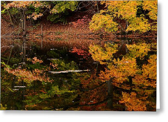 Autumn Art Greeting Cards - Reflective Colors Greeting Card by Lourry Legarde