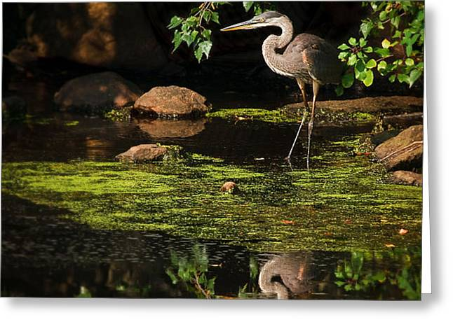 reflective heron Greeting Card by Sylvia J Zarco