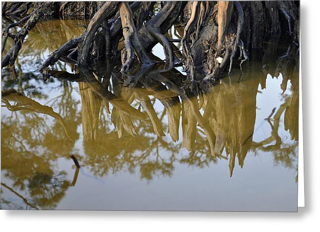 Beach Photographs Greeting Cards - Reflective Stump Greeting Card by Bruce Gourley