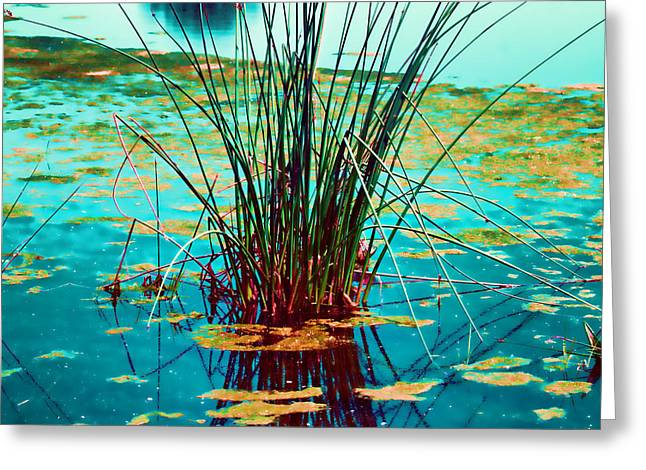 Reflective Water Greeting Cards - Reflective Water Plants Greeting Card by Bonnie Bruno