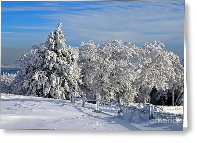 White Knob Mountains Greeting Cards - Refresh Greeting Card by Lois Bryan