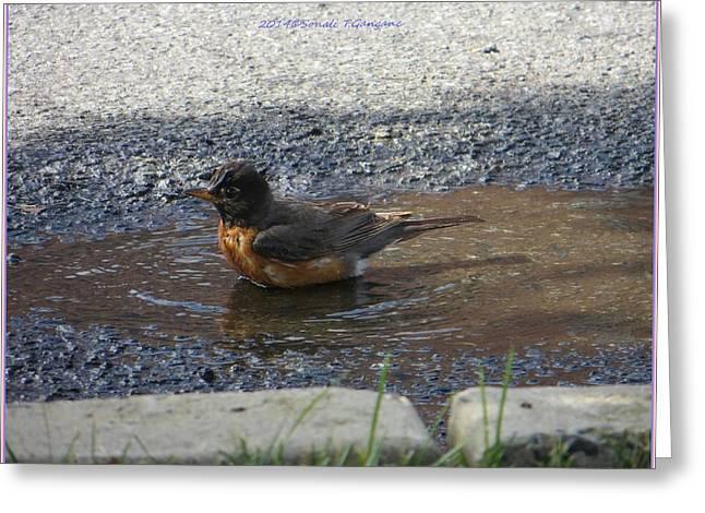 Bird Greetingcards Greeting Cards - Refreshing bath Greeting Card by Sonali Gangane