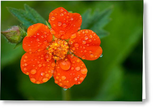 Refreshing Greeting Card by Matt Dobson