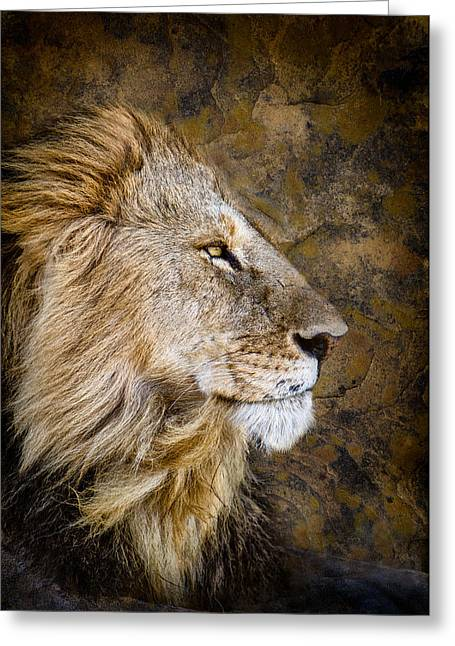 Awe Inspiring Greeting Cards - Regal Bearing Greeting Card by Mike Gaudaur