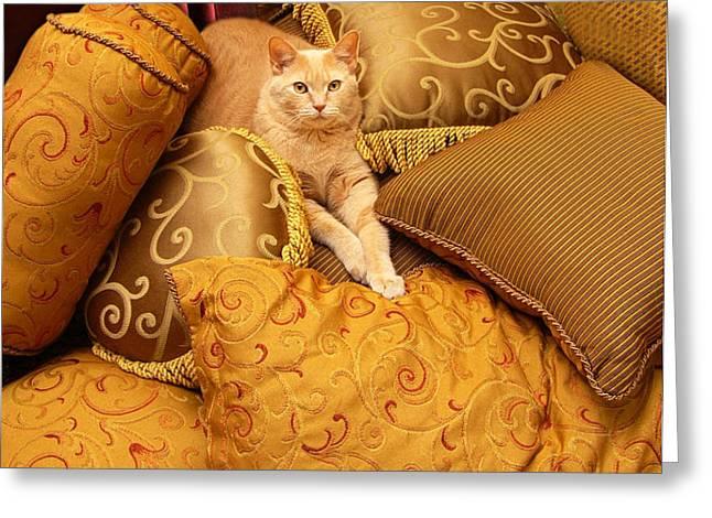 Regal Feline Greeting Card by Amy Cicconi