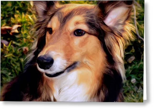 Best Friend Greeting Cards - Dog - Collie - Regal Shelter Dog Greeting Card by Luther   Fine Art