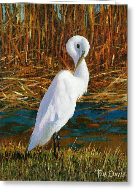 Great Egret Greeting Cards - Regal White Greeting Card by Tim Davis