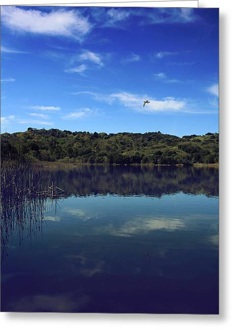 Lafayette Reservoir Greeting Cards - Regardless of the Blues Greeting Card by Laurie Search