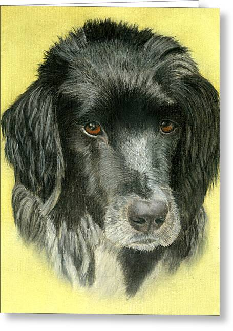 Collie Pastels Greeting Cards - Reggie Greeting Card by Sarah Dowson