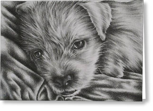 Puppies Drawings Greeting Cards - Reginald Greeting Card by Lisa Marie Szkolnik