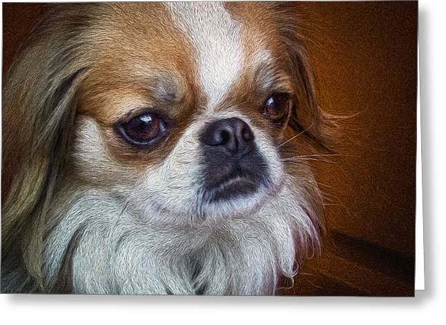 Japanese Puppy Greeting Cards - Reilly the Japanese Chin dog Greeting Card by Gilad Koriski