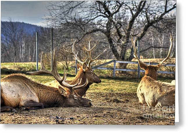 Rudolph Greeting Cards - Reindeer Rest Greeting Card by Brenda Giasson