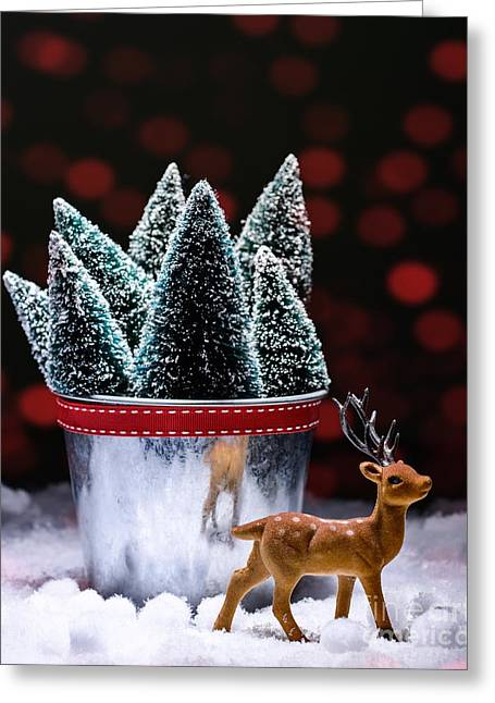 Fir Trees Greeting Cards - Reindeer With Christmas Trees Greeting Card by Amanda And Christopher Elwell