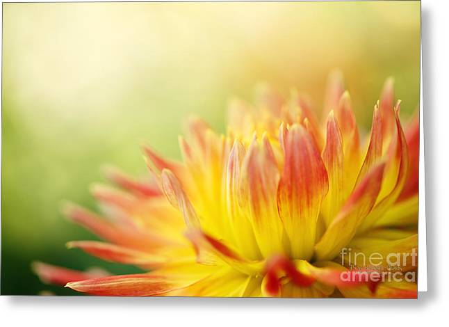 Rejoice Greeting Card by Beve Brown-Clark Photography