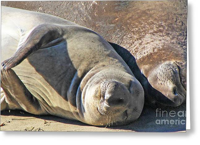 Elephant Seals Greeting Cards - Relaxation Greeting Card by Kris Hiemstra