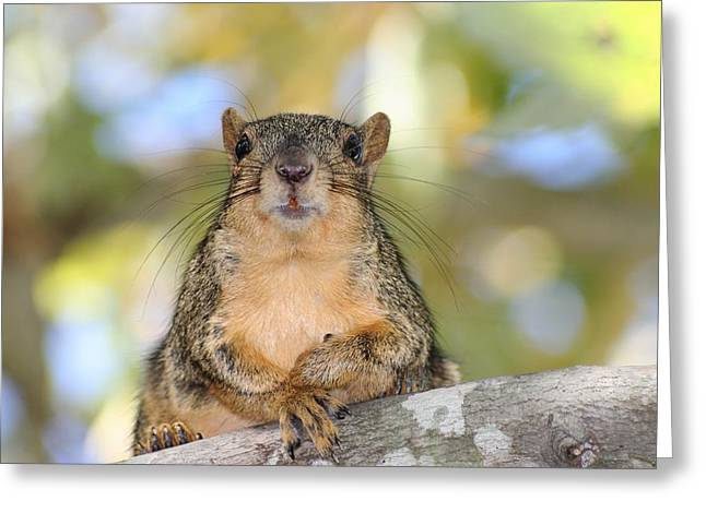 Fox Squirrel Greeting Cards - Relaxing Moment Greeting Card by Ester  Rogers