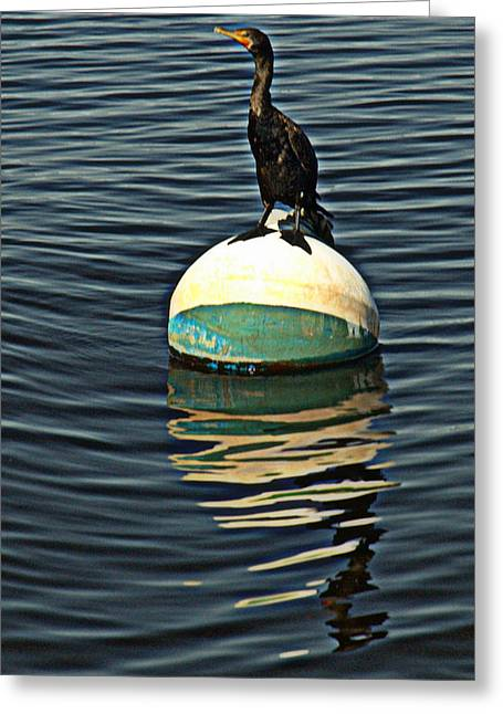 Waterlife Greeting Cards - Relaxing on the bay Greeting Card by Bruce Carpenter