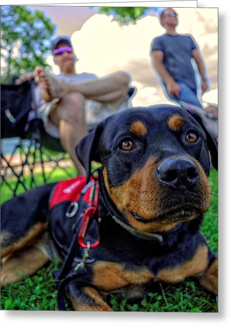 Rottweiler Greeting Cards - Relaxing Rottie Greeting Card by Greg Mimbs