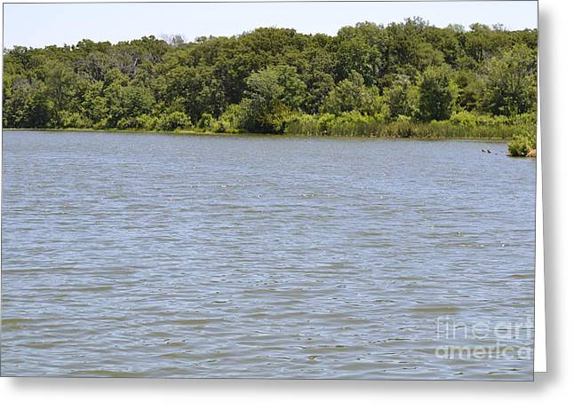 Pond In Park Greeting Cards - Relaxing View Greeting Card by Ruth  Housley