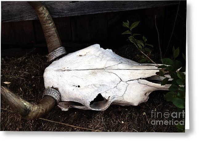 Arizona Contemporary Cowboy Greeting Cards - Remains of the Day Greeting Card by John Rizzuto