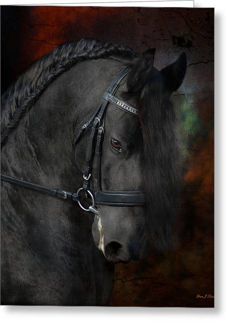 Equestrian Prints Photographs Greeting Cards - Rembrandt  Greeting Card by Fran J Scott