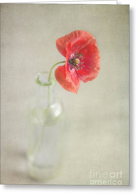 Poppy Decorations Greeting Cards - Remember Greeting Card by Elena Nosyreva